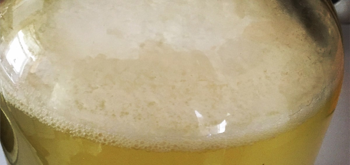Making a Sour Mead with Lactobacillus Plantarum